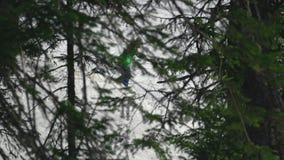 Snowboarding da mulher através da floresta durante o inverno r vídeos de arquivo