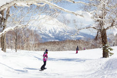 Snowboarding durch Bäume in Niseko, Japan Stockfoto