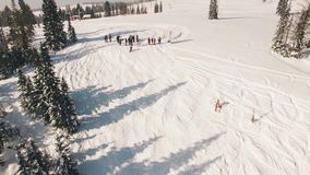 Snowboarding freeriding in forest aerial view stock footage