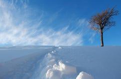 Snowboardspår i ny snö Arkivfoto