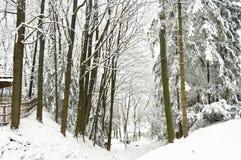 Snowbound лес и замороженное озеро Shevchenkivskyi Hai Львов Украина Стоковое Изображение