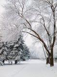 Snowbound дорожка парка города стоковая фотография rf