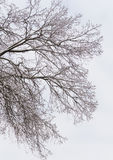Snowbound bare forest Stock Photos