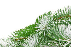 Snowbound branch of fir Royalty Free Stock Photo