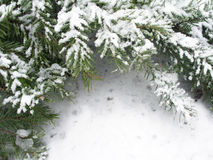 Snowbound branch of fir Royalty Free Stock Images