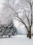Snowbound city park walkway. Snowbound walkway through the trees in the city park covered with frost Royalty Free Stock Photography