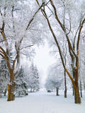 Snowbound city park walkway. Snowbound walkway through the trees in the city park covered with frost Stock Photography