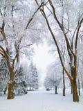 Snowbound city park walkway Stock Photography