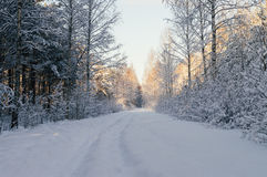 Snowbound countryside road in scenic forest Stock Photos