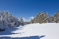 Snowbound forest Stock Image