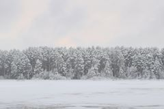 Snowbound forest beyond the river. In a winter evening Stock Photos