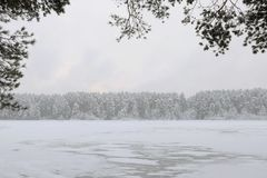 Snowbound forest beyond the river. In a winter evening Royalty Free Stock Photography