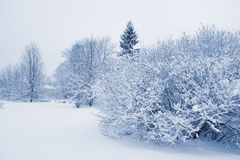Snowbound forest Royalty Free Stock Images