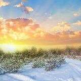 Snowbound forest at the evening Stock Photography