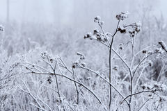 Snowbound grass Royalty Free Stock Image
