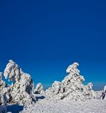 Snowbound pine forest Stock Image