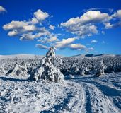 Snowbound road in a forest Royalty Free Stock Photos