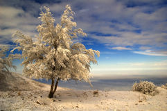 Snowbound tree. The snowbound tree beside precipice Royalty Free Stock Images