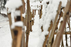 Snowbound twig fence in the forest close up. Royalty Free Stock Photography