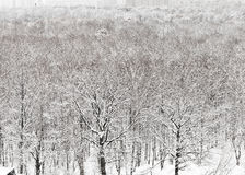 Snowbound urban park in winter Stock Photo
