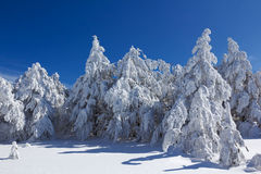 Snowbound winter forest Royalty Free Stock Photography