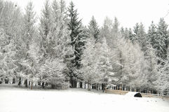 Snowbound winter forest in overcast. Beautiful winter landscape Royalty Free Stock Photo