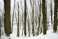 Snowbound winter forest in overcast. Beautiful winter landscape Royalty Free Stock Photography