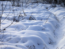 Snowbound winter meadow Stock Images