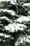 Snowbound Zweig lizenzfreie stockfotografie