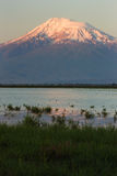 Snowcapped mountain of Ararat with blue lake in front. The Green grass and the blue lake in front of snowcapped Mount of Ararat Stock Images