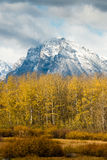 Snowcapped Mountains over Yellow Fall Leaves Stock Photography
