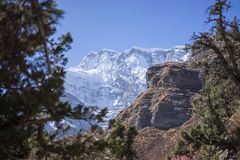Snowcapped Peak and Forest in the Himalaya mountains, Annapurna region, Nepal Royalty Free Stock Image