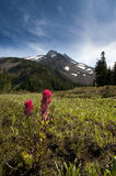 Snowcapped peak in summer Royalty Free Stock Images