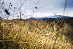 Snowcapped peak, yellow grass and blades Stock Photos