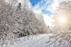 Snowcapped trees in the glistening sunshine Stock Image