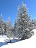 Snowcapped Weihnachtsbaum und hölzerner Steg Stockbild