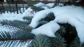 SnowCoat Fotografía de archivo libre de regalías