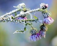 Snowcovered Blume stockfotos