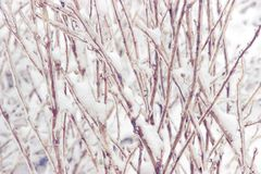 Snowcovered branch Stock Photos
