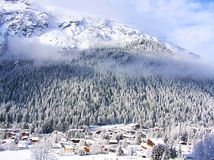Snowcovered fir trees on the slopes of French Alps Stock Photography