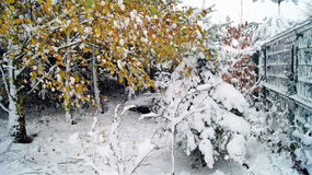Snowcovered garden. Birch and spruce - christmastree Stock Photos