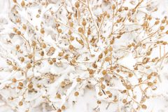 Snowcovered herb Royalty Free Stock Images