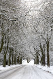 Snowcovered Road and trees Royalty Free Stock Photography