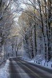 Snowcovered väg i skog Fotografering för Bildbyråer