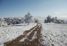snowcowered trees för grässlätt väg Arkivfoton