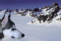 Snowdog Royalty Free Stock Photography