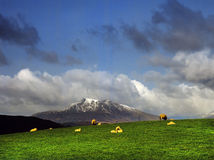 Snowdon. Fields with sheep and the snow covered peak of snowdon behind. In the Snowdonia national park, gwynedd, north Wales, uk, gb Royalty Free Stock Image