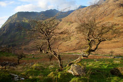 Snowdonia trees Royalty Free Stock Image