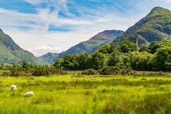 Snowdonia view from Llanberis, Wales, UK. Snowdonia view from Llanberis over Derlwyn and Mount Snowdon, Gwynedd, Wales, UK Stock Photos