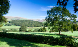Snowdonian view of Mount Tarrenhendre in Wales. Panoramic view looking across fields with sheep towards Mount Tarrenhendre in Snowdonia, North Wales.  Trees and Stock Photo